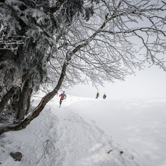 Trail hivernal du Sancy